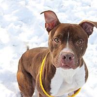 Adopt A Pet :: Benji - Greensboro, NC