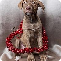 Adopt A Pet :: Nemo - Miramar, FL