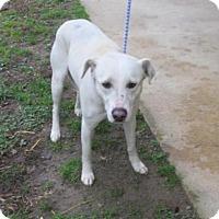 Adopt A Pet :: Alena - Rocky Mount, NC