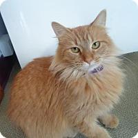 Adopt A Pet :: Daisy - Montello, WI