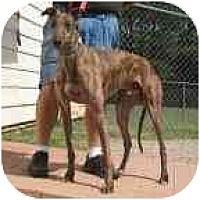 Adopt A Pet :: Victor - Oak Ridge, NC