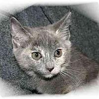Adopt A Pet :: Gracie - Montgomery, IL