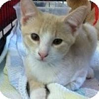Adopt A Pet :: Daryl - Riverside, RI