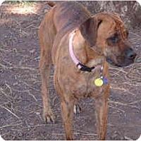 Adopt A Pet :: Teegan - Scottsdale, AZ