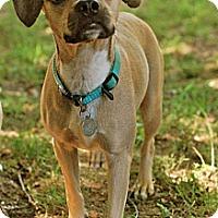Adopt A Pet :: Darla - Homewood, AL