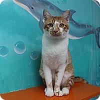 Adopt A Pet :: Sammy - Newport Beach, CA