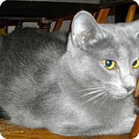 Adopt A Pet :: Finley - Harrisburg, NC