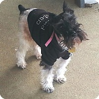 Adopt A Pet :: Zander/pending - Sharonville, OH