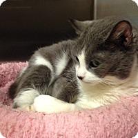 Adopt A Pet :: Lora - Muncie, IN