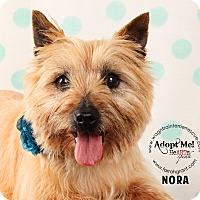 Adopt A Pet :: Nora - Omaha, NE
