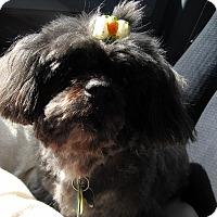 Adopt A Pet :: Peyton - Wilmington, DE