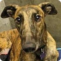 Adopt A Pet :: Jasmine - Tucson, AZ