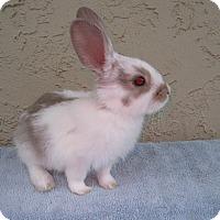 Adopt A Pet :: Arrow - Bonita, CA