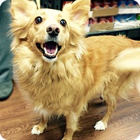 Adopt A Pet :: Izzy - Memphis, TN
