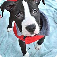 Adopt A Pet :: Macklemore - Salt Lake City, UT