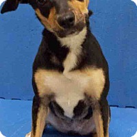 Adopt A Pet :: ADOPTED!!!   Jo - Channahon, IL