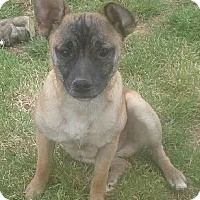 Adopt A Pet :: Boo - Staunton, VA