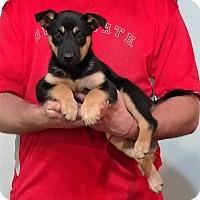 Adopt A Pet :: Maisy - South Euclid, OH