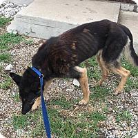 Adopt A Pet :: America - Lewisburg, TN