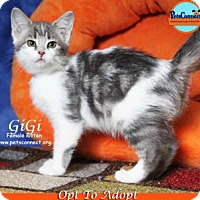 Adopt A Pet :: GiGi - South Bend, IN