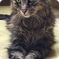 Adopt A Pet :: Elliott - Fryeburg, ME