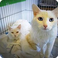 Adopt A Pet :: Dutchess & Sabastian - Casa Grande, AZ