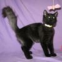 Adopt A Pet :: Kuro - Powell, OH