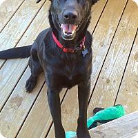 Adopt A Pet :: Maddie - Redmond, WA