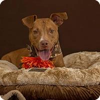 Terrier (Unknown Type, Medium) Mix Dog for adoption in Flint, Michigan - Sadie