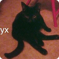 Adopt A Pet :: 16-185 Onyx - York County, PA