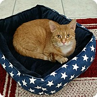 Adopt A Pet :: Baxter - Austintown, OH