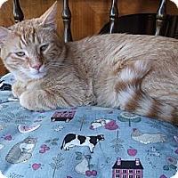Adopt A Pet :: Baxter - Bedford, MA
