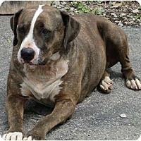 Adopt A Pet :: Sophie - Columbus, IN