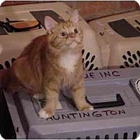Adopt A Pet :: Jose - Chesapeake, VA