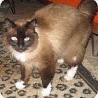 Adopt A Pet :: Max - Ennis, TX