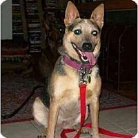 Adopt A Pet :: Frost - Phoenix, AZ
