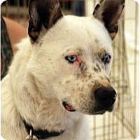 Adopt A Pet :: Smith - Phoenix, AZ