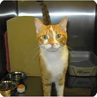 Adopt A Pet :: Olli - Warminster, PA