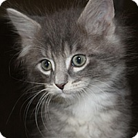 Adopt A Pet :: Mittenz - North Highlands, CA