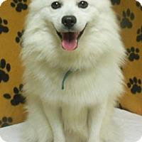 Adopt A Pet :: Snow - Gary, IN