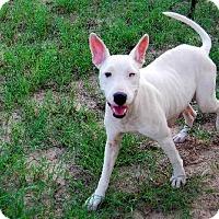 Adopt A Pet :: Legacy - Georgetow, TX