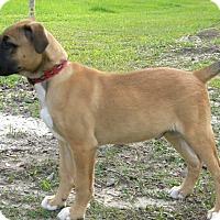 Adopt A Pet :: Buddy - SOUTHINGTON, CT