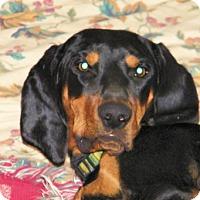 Adopt A Pet :: Nina - Cleveland, OH