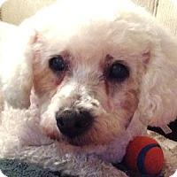 Adopt A Pet :: Lani - La Costa, CA
