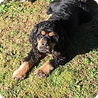 Adopt A Pet :: RUNNER - Tacoma, WA