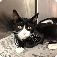 Adopt A Pet :: Journey - East Brunswick, NJ