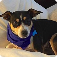 Adopt A Pet :: Lola (GA) - Atlanta, GA