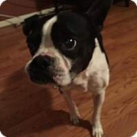 Adopt A Pet :: Joey - Weatherford, TX