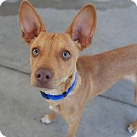 Adopt A Pet :: Eli - Chula Vista, CA