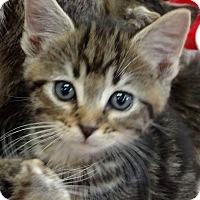 Adopt A Pet :: Gabriel - Putnam, CT